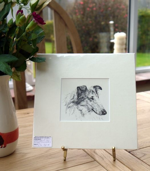 Collie head - Col O1 -1960's print by Bridget Olerenshaw